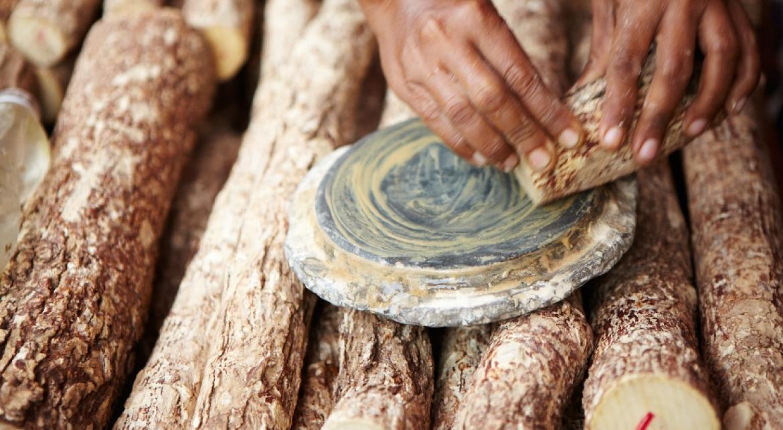 Thanaka – tajemství ukryté ve stromu